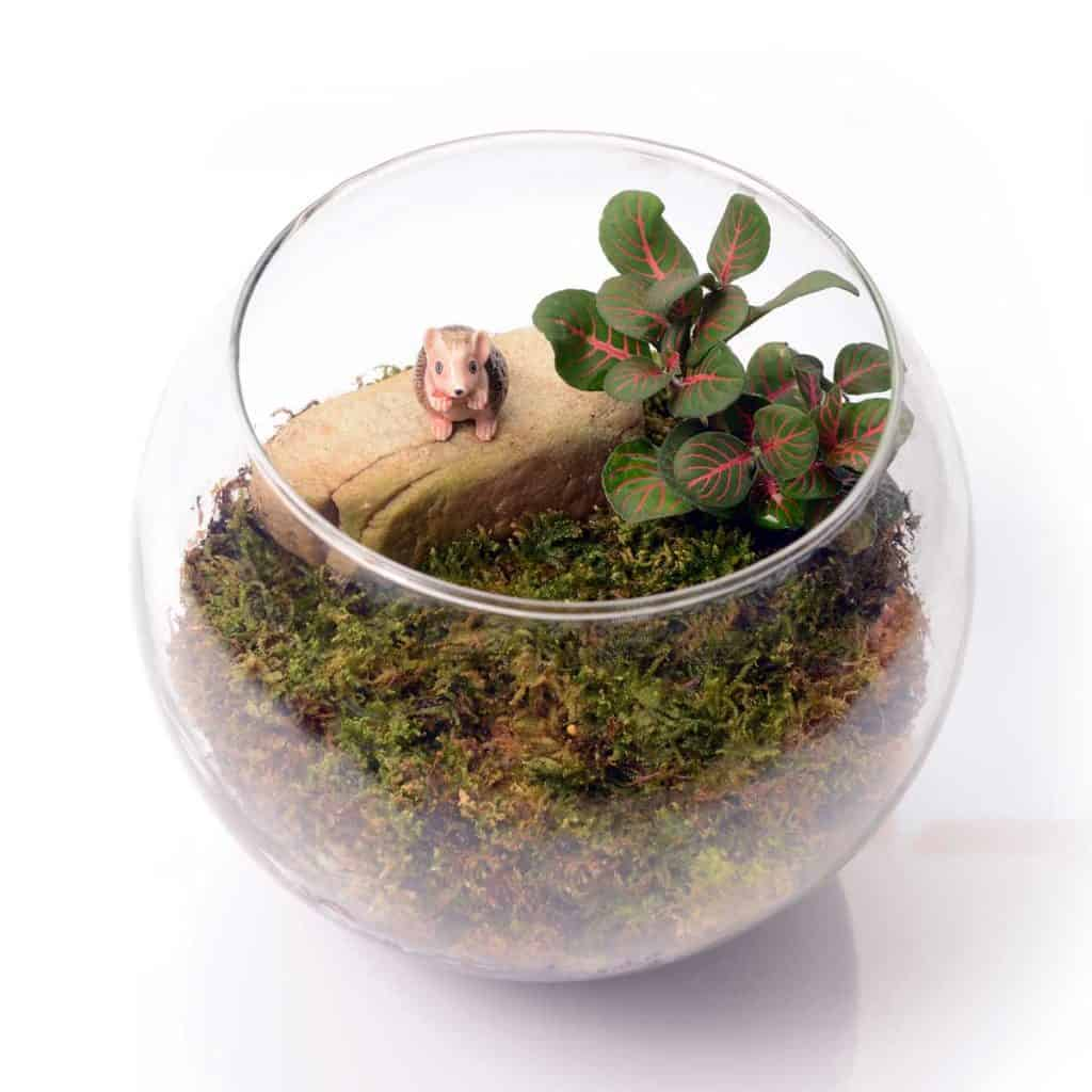terrarium small glass jar with moss and existing indoor plant