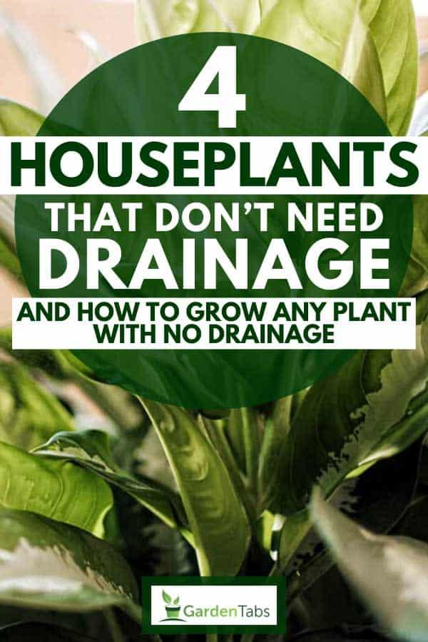 Yellow Planter No Drainage Holes