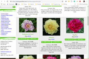 Adelman Peony Gardens website product page for Peony Plants or Bulbs