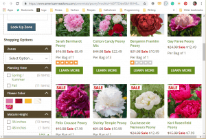 American Meadows website product page for Peony Plants or Bulbs