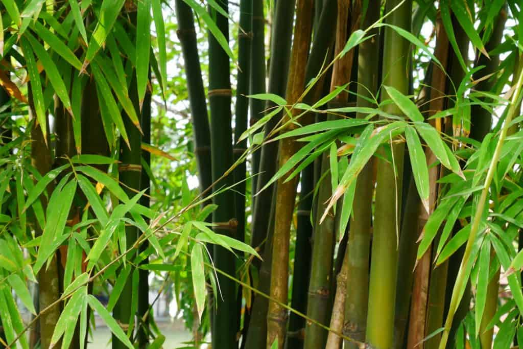 Bamboo tree close up photography