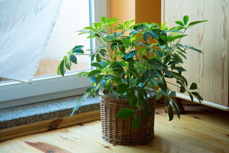 14 House Plants That Don't Need Drainage