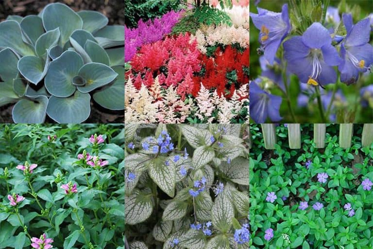 21 Gorgeous Shade Perennials for Zone 3