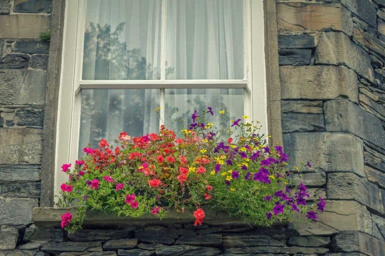 How to Choose the Right Window Box for Your Apartment