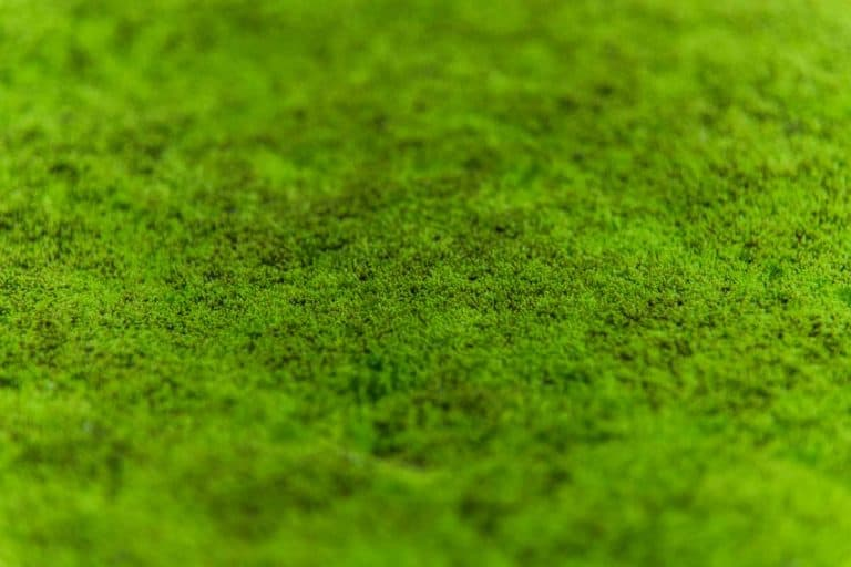 How to Create a Moss Lawn in 5 Easy Steps