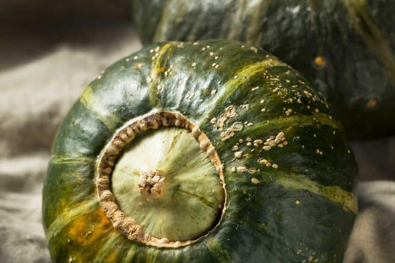 How to Grow Buttercup Squash (Care Tips, Photos and Shopping Links)