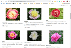 Fina Garden website product page for Peony Plants or Bulbs
