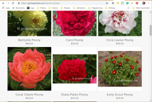 Grow Peonies website product page for Peony Plants or Bulbs