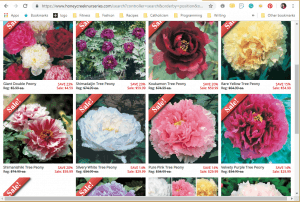 Honeycreek Nurseries website product page for Peony Plants or Bulbs