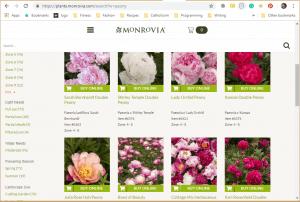 Monrovia website product page for Peony Plants or Bulbs