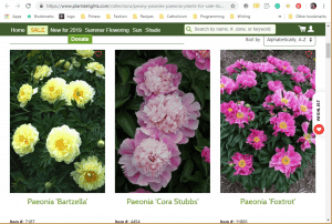 Plant Delights Nursery website product page for Peony Plants or Bulbs