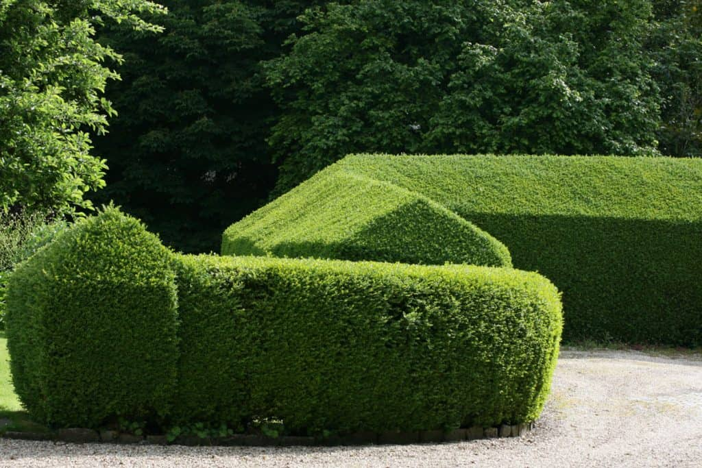 Private hedge trimmed to a triangle shaped form