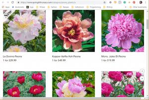 Spring Hill Nurseries website product page for Peony Plants or Bulbs