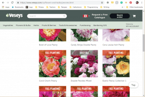 Veseys website product page for Peony Plants or Bulbs