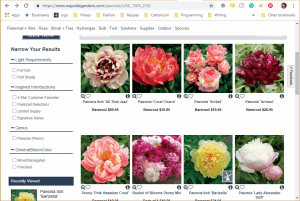 Wayside Gardens website product page for Peony Plants or Bulbs