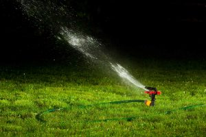 Can I Water My Lawn at Night?