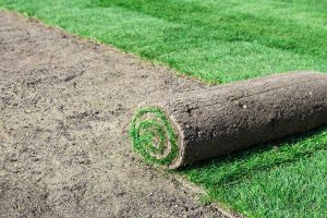 How Much Does A New Lawn Cost?