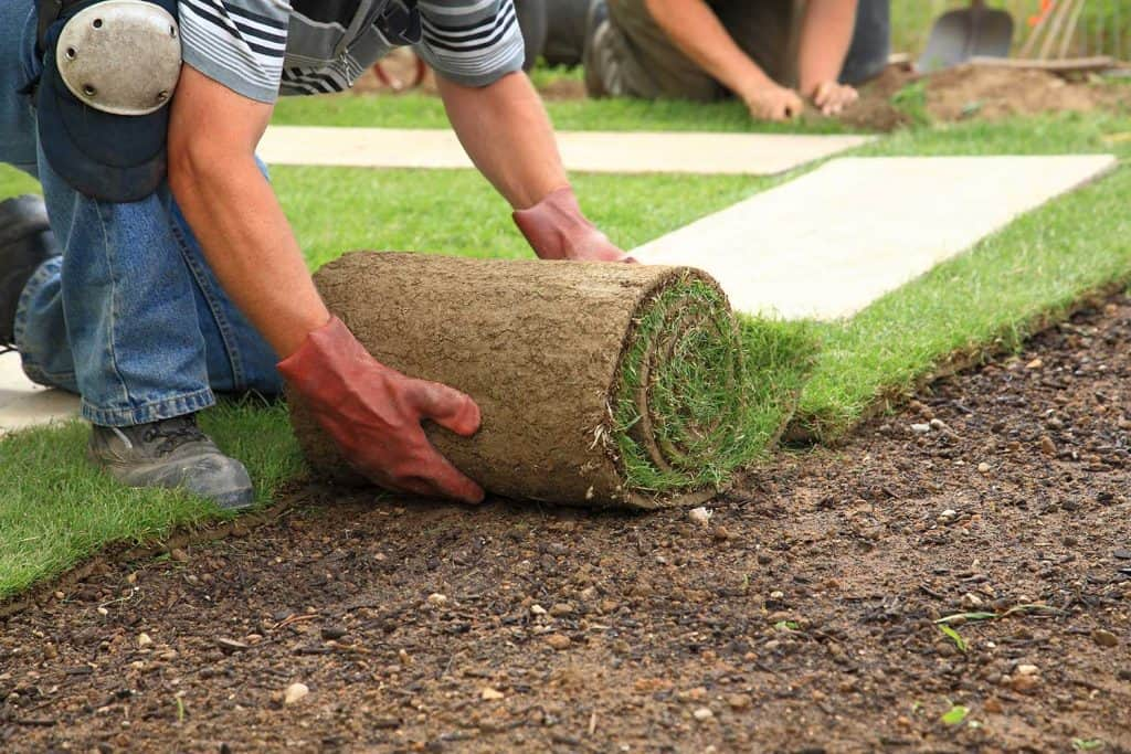 A man with red gloves laying sod for new lawn