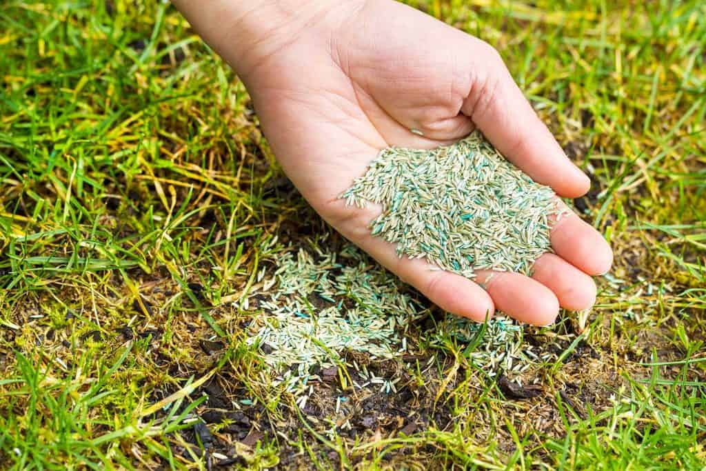 A man's hand planting new grass seed to bare spot on yard