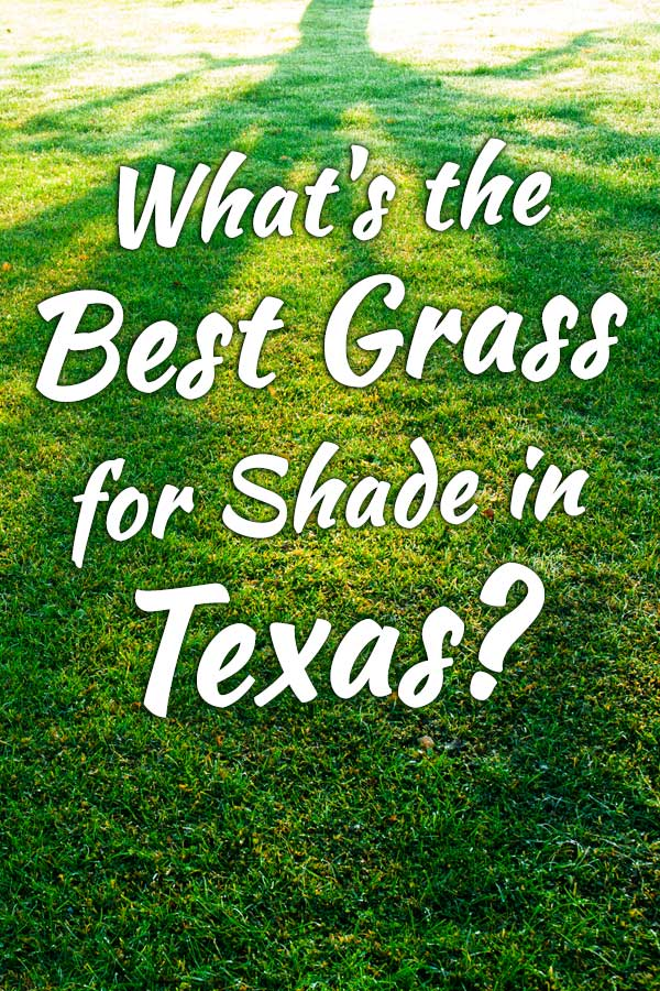 What's the Best Grass for Shade in Texas?