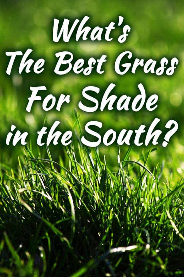 What's the Best Grass for Shade in the South?