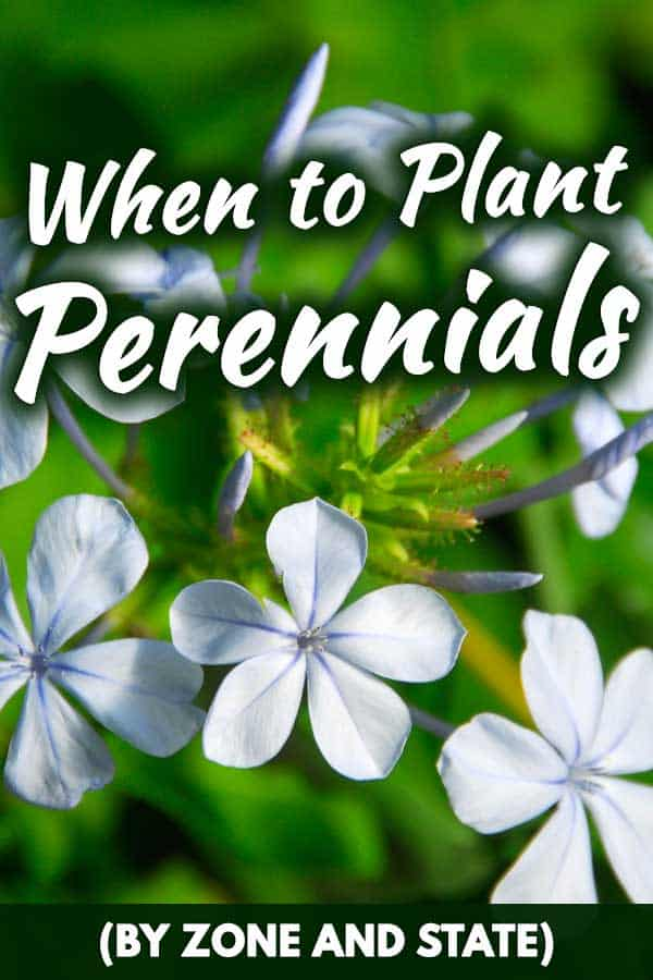 When to Plant Perennials (By zone and state)