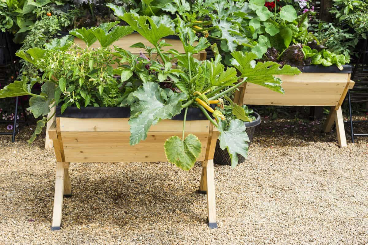 How to Build a Planter Box for Vegetables