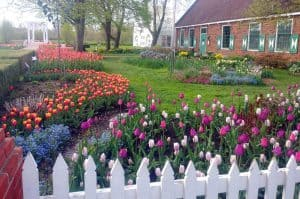 Where Can I Plant Tulips in My Garden?