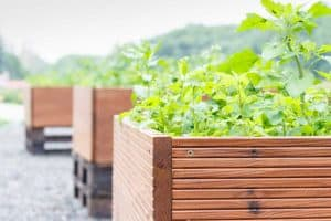 Read more about the article How To Build A Planter Box For Vegetables