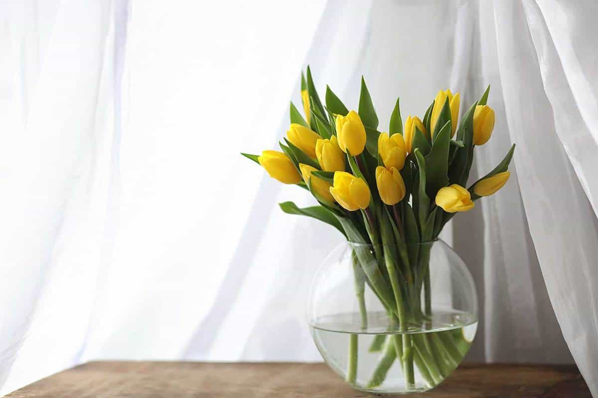 A-bouquet-of-yellow-tulips-in-a-vase-by-the-window
