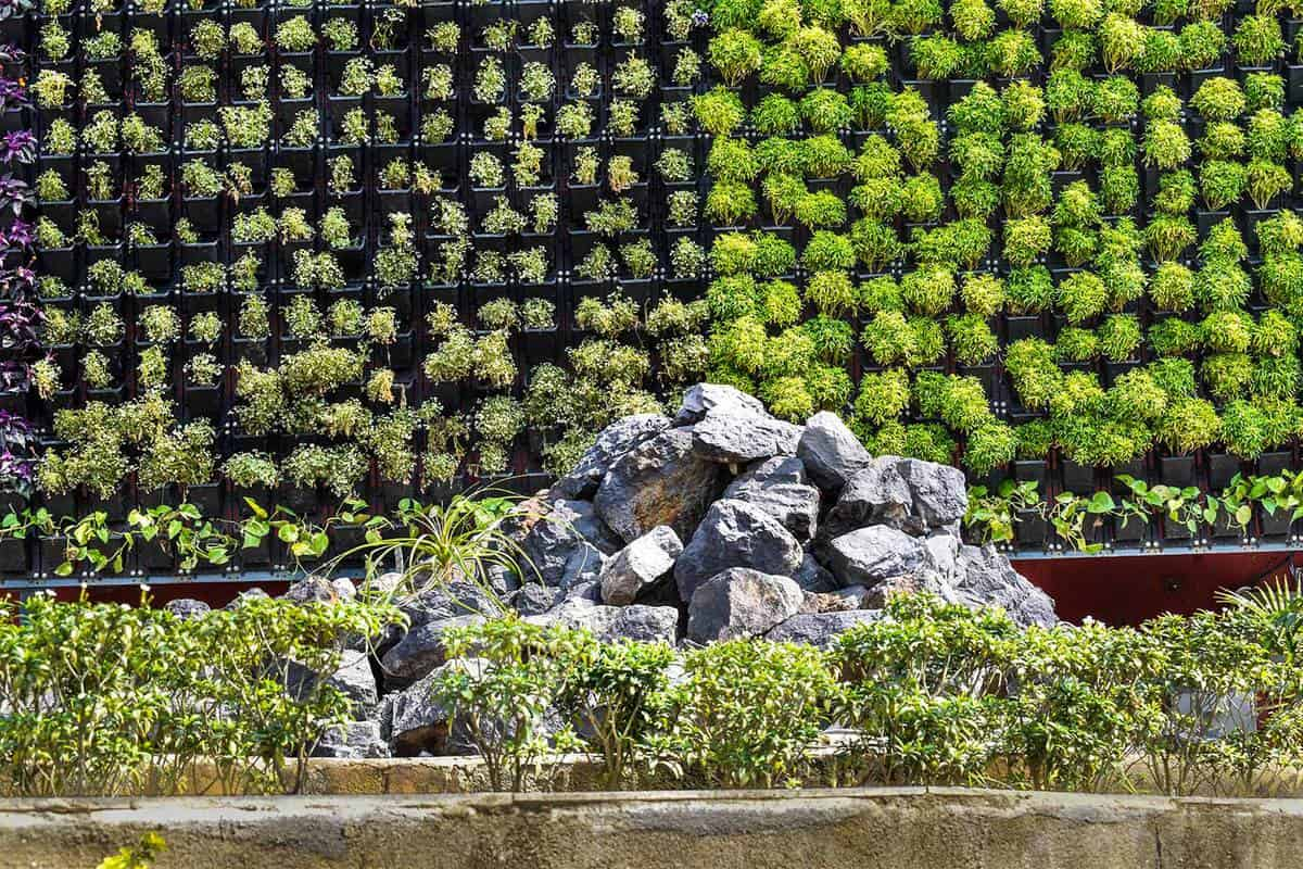 A natural and well-decorated wall designed by plant, flower and rocky foreground