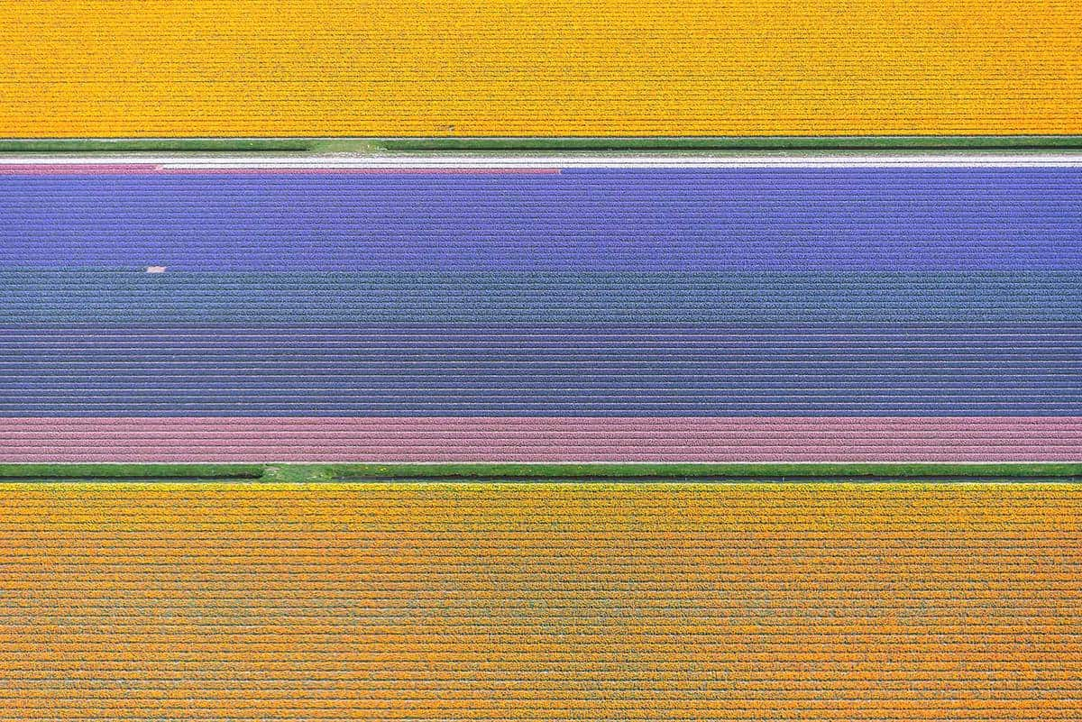 Aerial view of a pattern of flowers in a flower bulb field