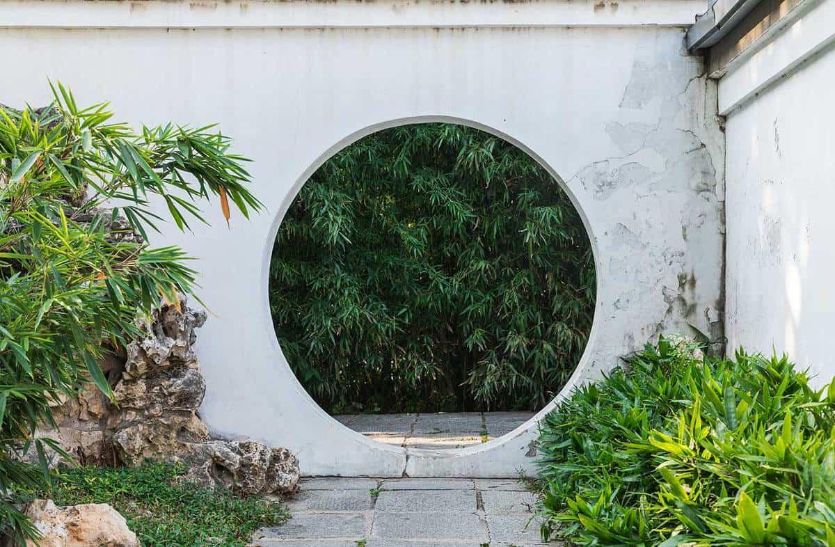 Bamboo in chinese garden