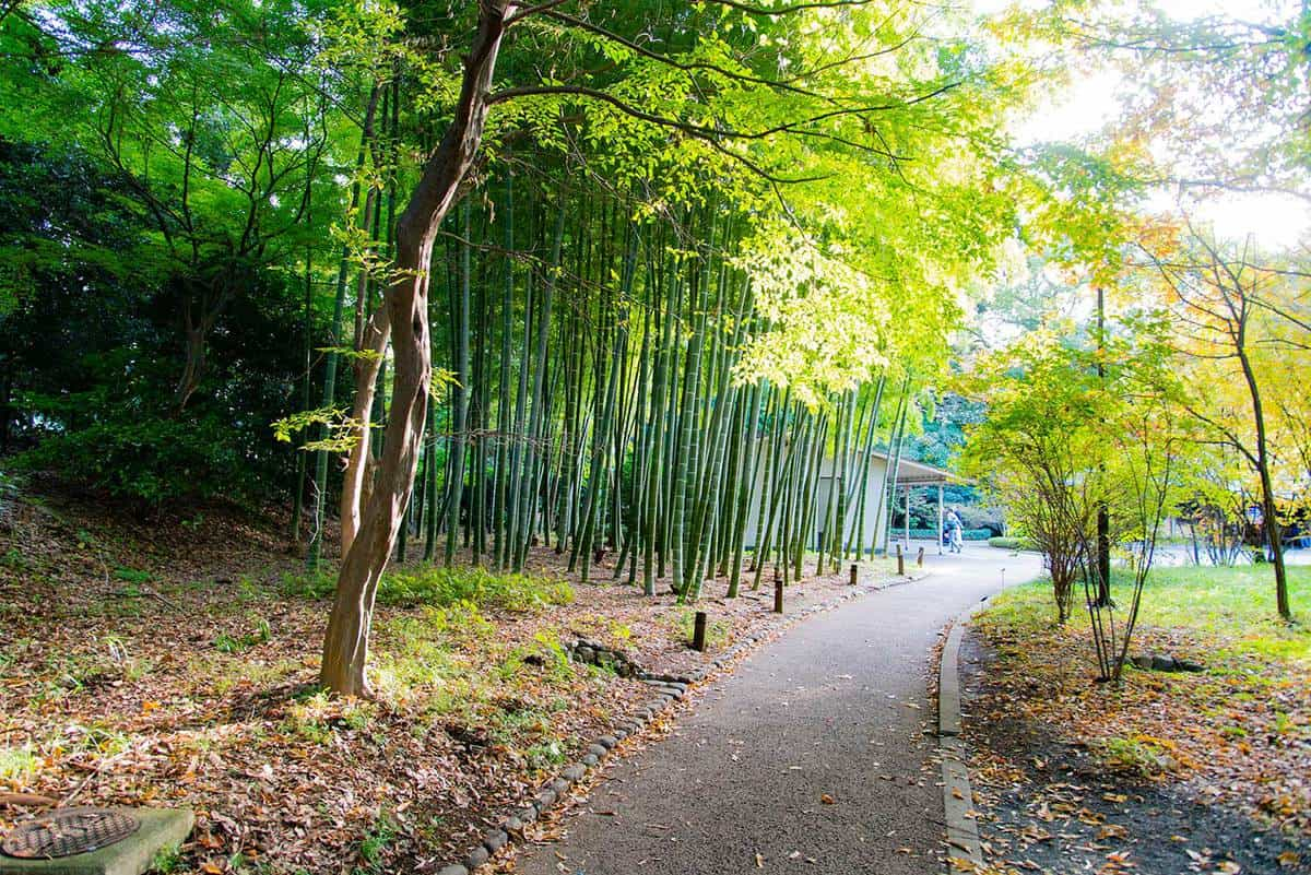 Bamboo trees at imperial palace