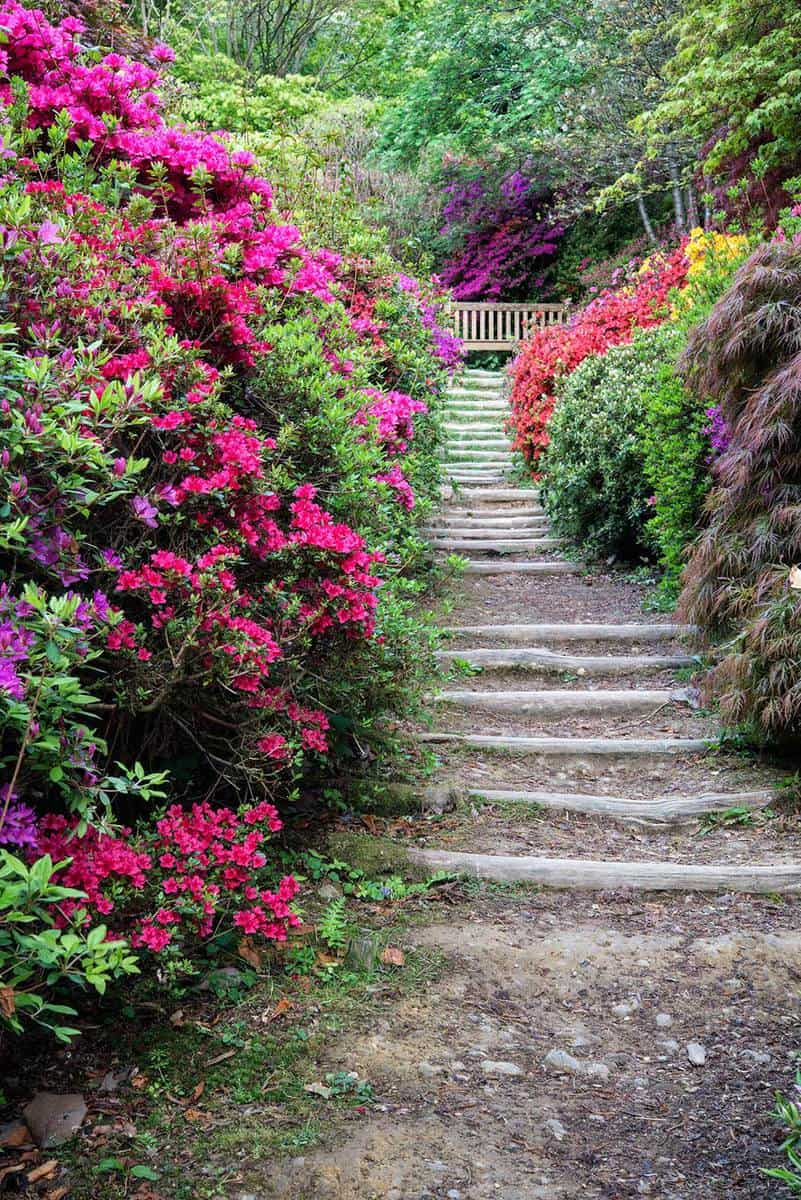 Beautiful vibrant landscape image of garden pathway