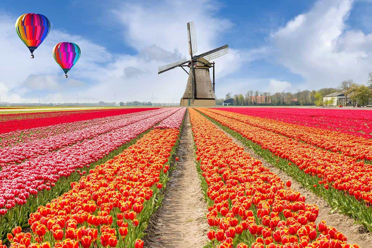 Bouquet of tulips with hot air ballon