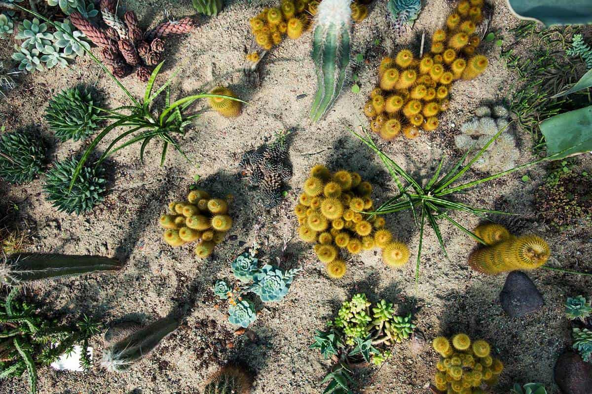 Cacti and succulent