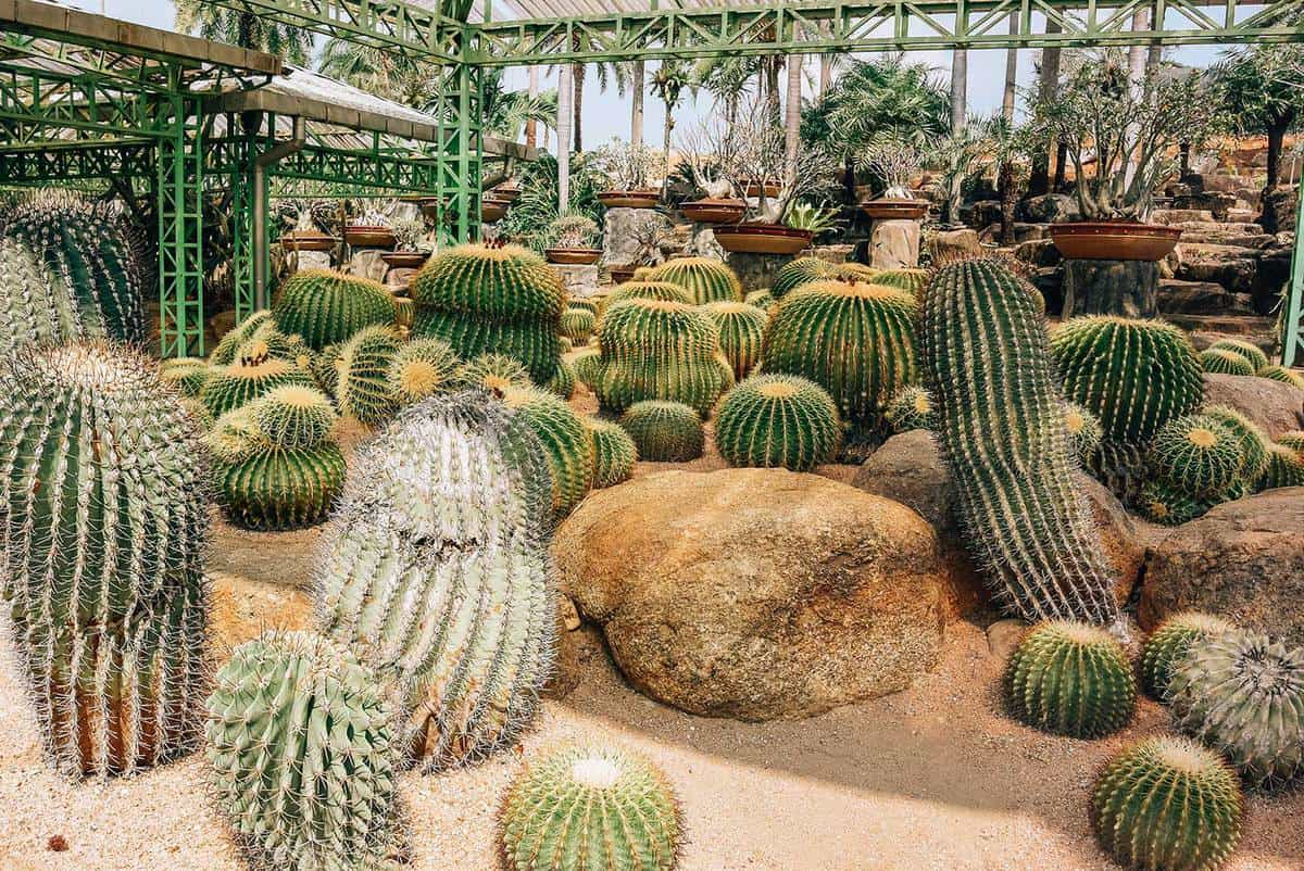 Cacti on a greenhouse