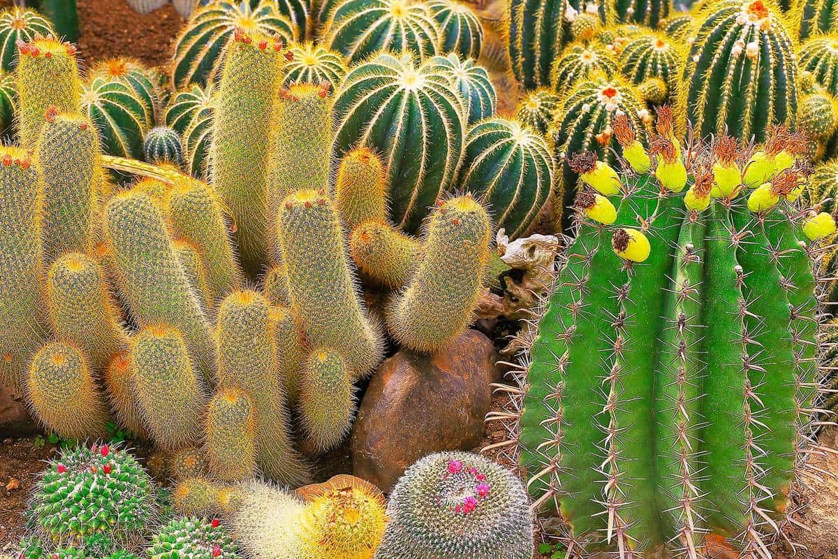 Cactus and succulent plants in nature green lush foliage garden