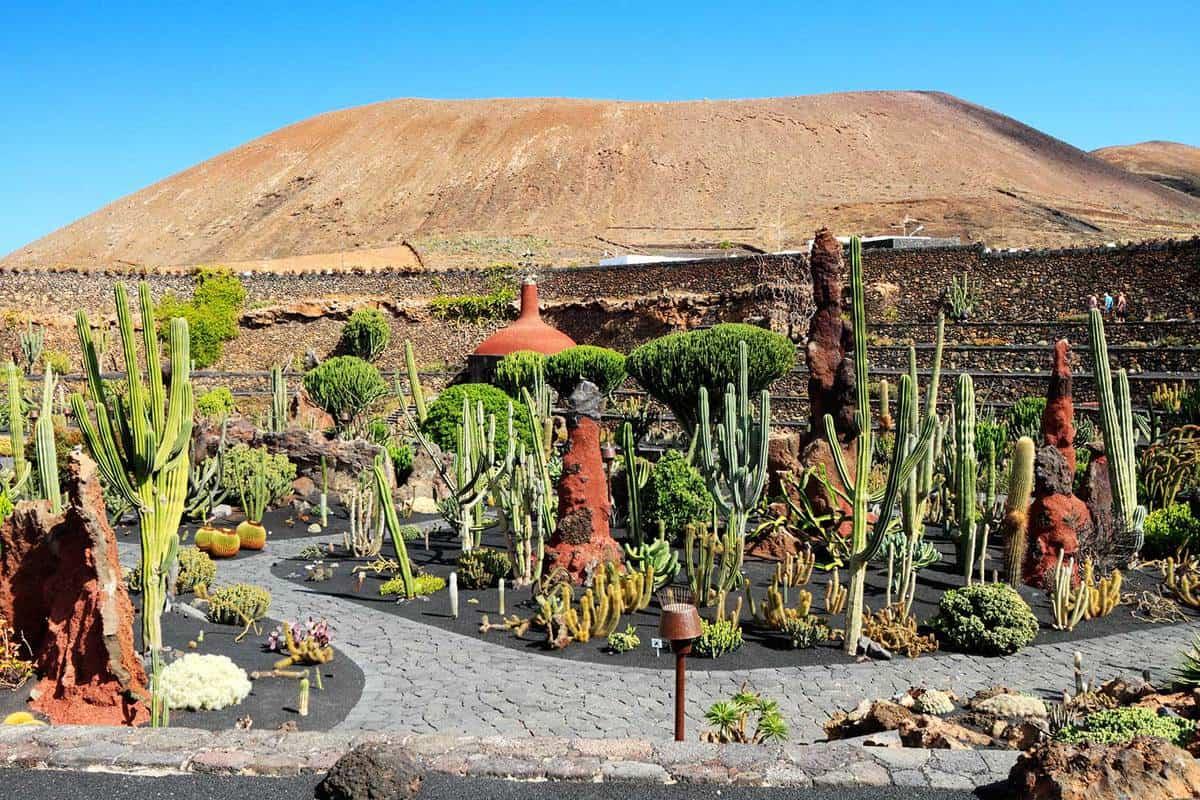 Cactus garden in an open field