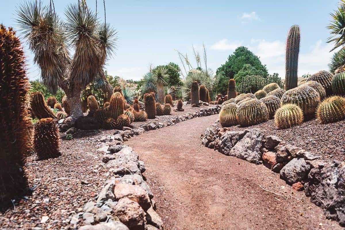 Cactus garden walkway