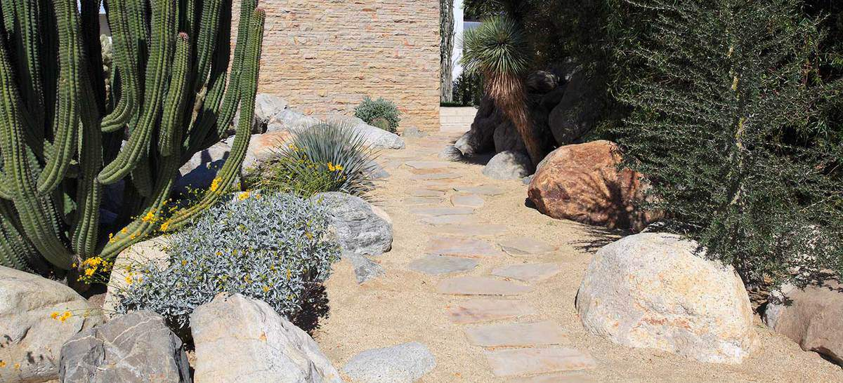 Cactus walkpath to a home