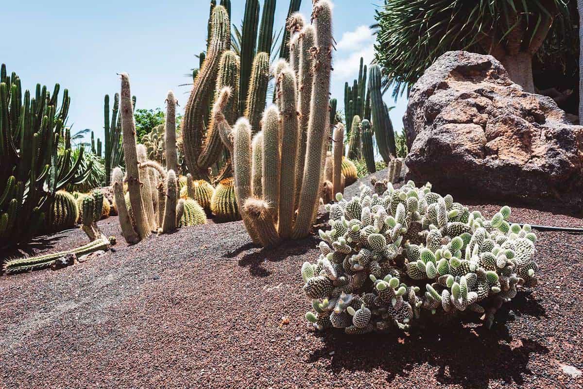 Cactuses in botanical garden