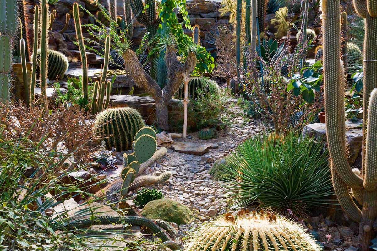 Cacuts garden