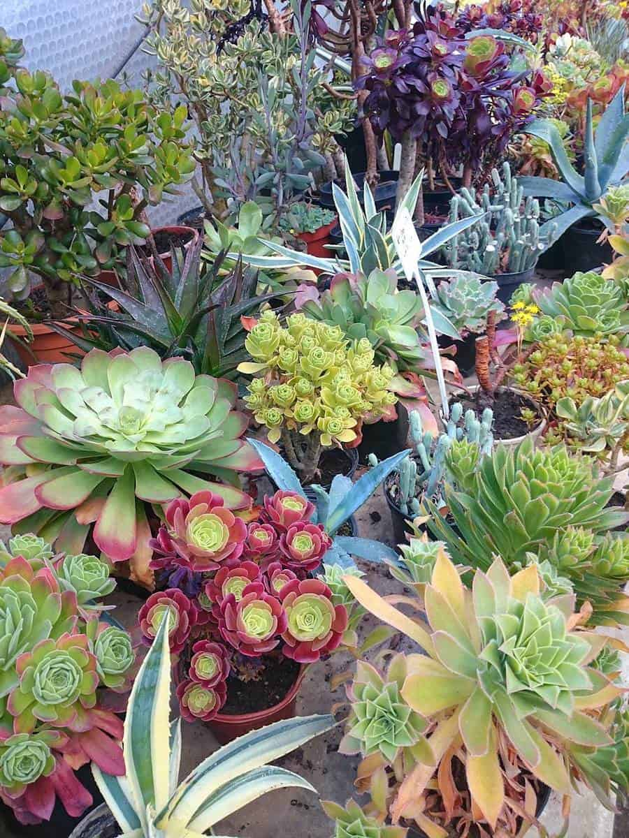 Colorful cactuses and succulents