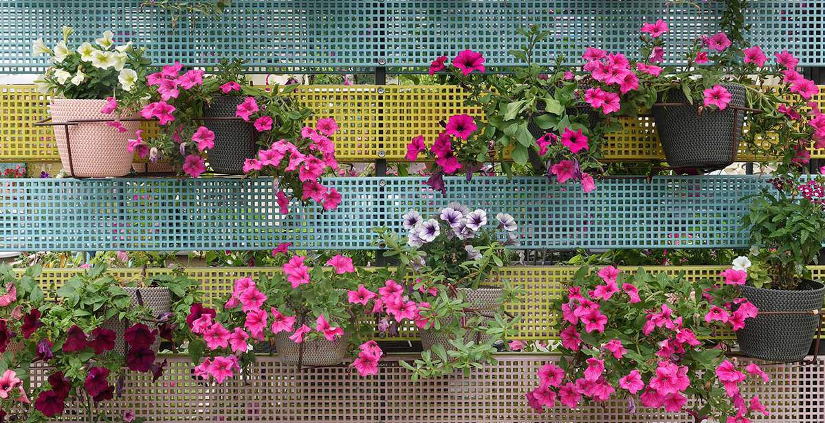 Colorful flowers and flowerpots variety beautiful balcony