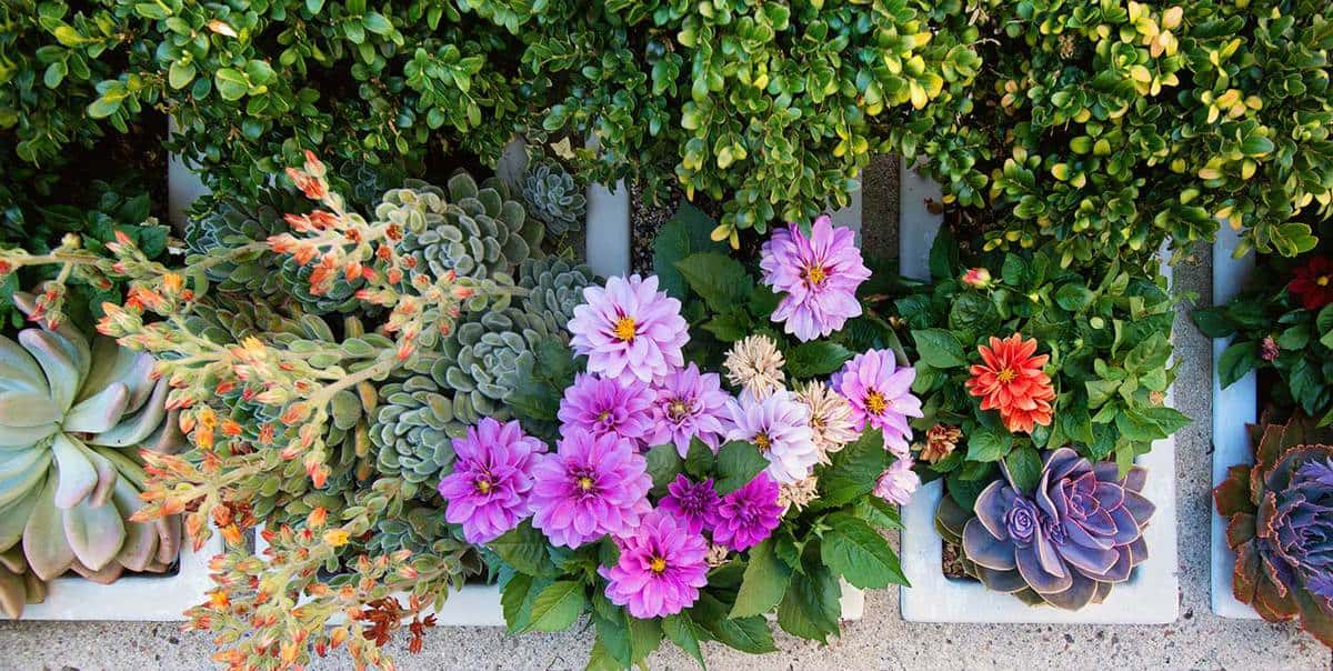 Colorful succulents and zinnia flowers