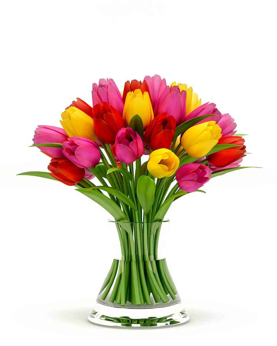 Colorful-tulips-in-a-glass-vase