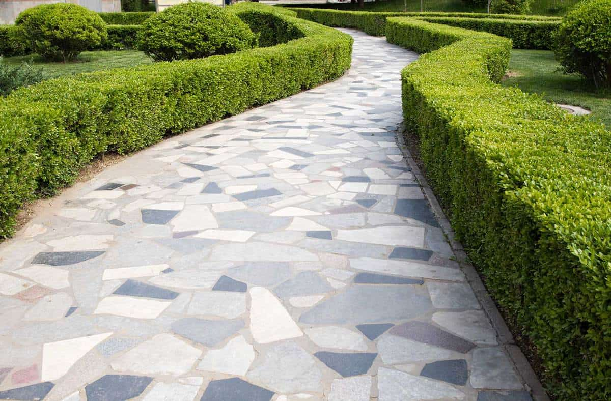 Crazy paving path winding between hedges