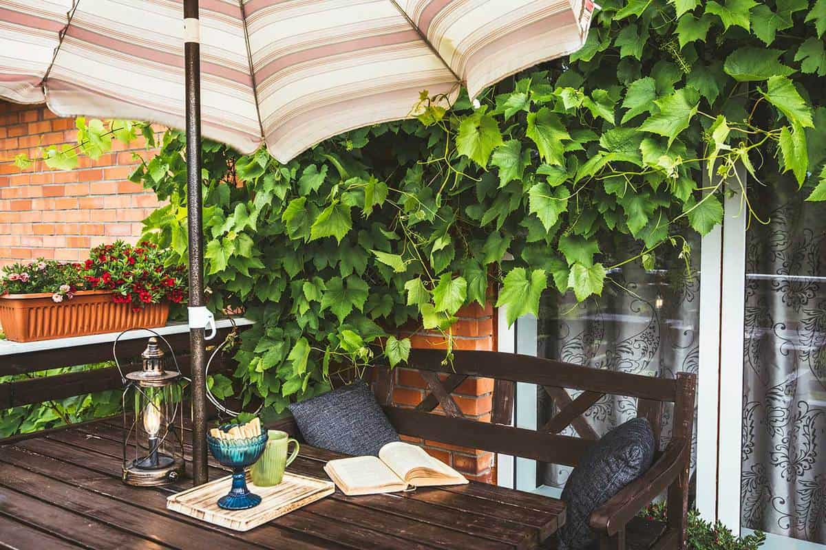 Cute private home balcony with lush grapevines as decoration